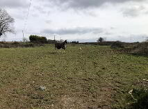 Photo 11 of Circa 2 Acres, Kilsheelan Village, Kilsheelan, Tipperary