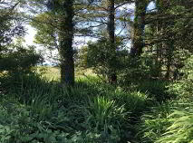 Photo 3 of Island, Stradbally