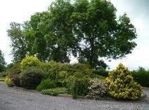 Photo 12 of Maryville, Ardlonan, Carlanstown, Kells