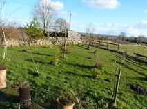 Photo 26 of Evikeens, Boyle, Roscommon