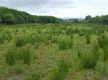 Photo 9 of Logcurragh, Swinford