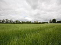 Photo 4 of C.42.4 Acres Residential Farm, Lullymore, Rathangan