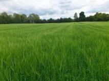 Photo 9 of C.42.4 Acres Residential Farm, Lullymore, Rathangan