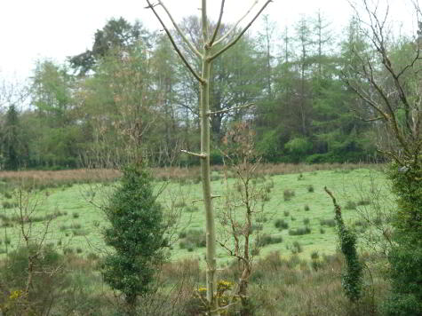 Photo 1 of Cavanalough Glebe, Drumsloe Road, Ballinamallard