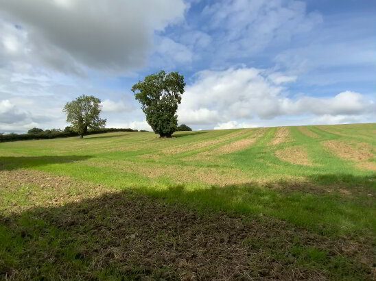 Photo 1 of 28 Acres - Newhaggard Lane, Bellewstown
